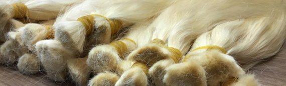 Ham Saçlarımız
